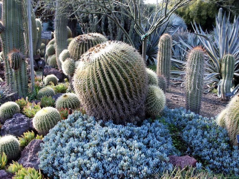 Cómo diseñar un jardín desértico Cacti, Gardens and Plants