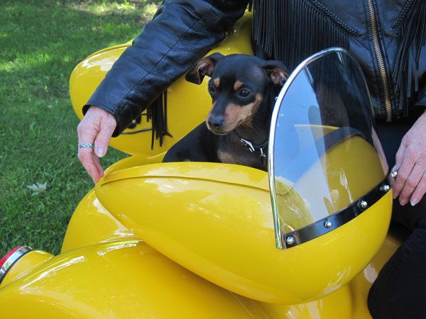 This is called the Poo-pee cruiser. A motorcycle attachment for your pet. (Dogs really...cats would NOT have this)