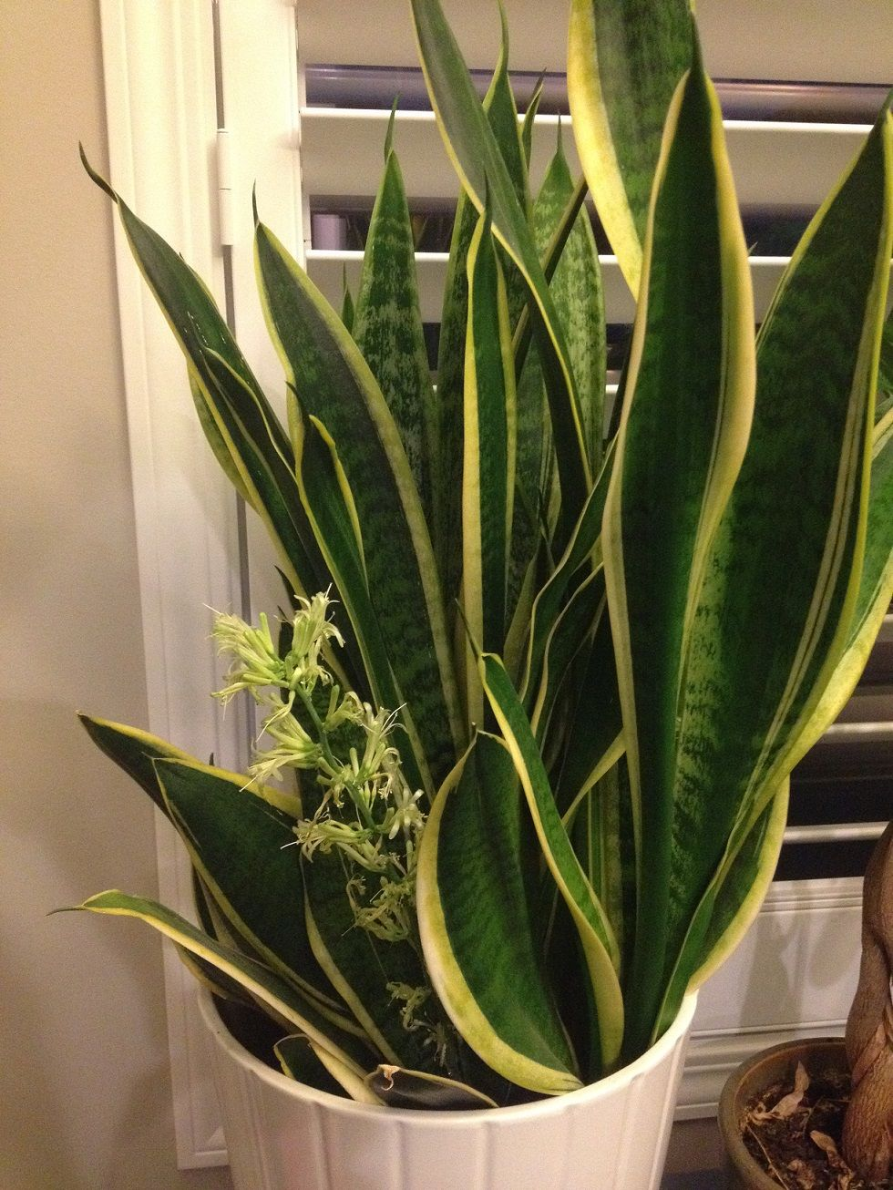 Home Interior Design Plant Of The Week