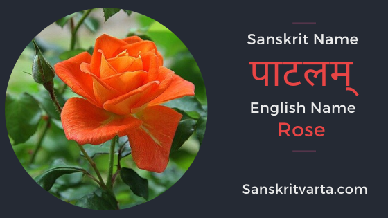 50 List Of Flowers Name In Sanskrit Language And Hindi With Pictures Sanskrit Learnsanskrit Sanskritvarta Flowers In 2020 Sanskrit List Of Flowers Sanskrit Names