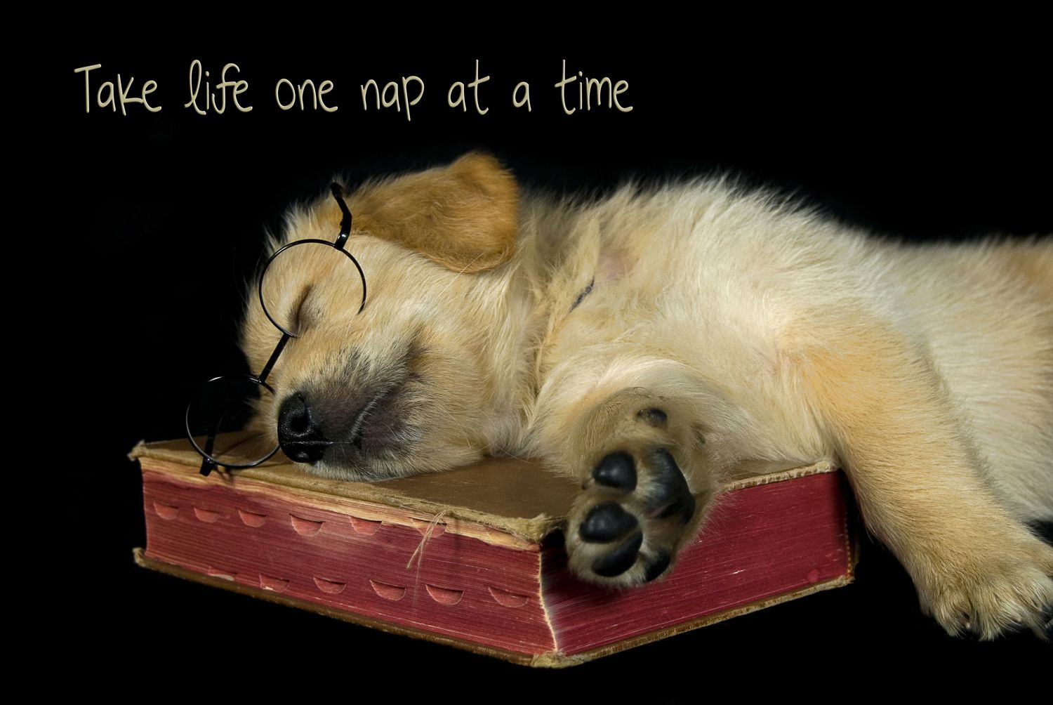 Golden retriever puppy napping on an old book.