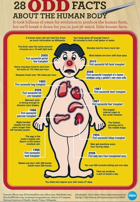28 Odd Human Body Facts #anatomy #body #facts | Skin and health ...