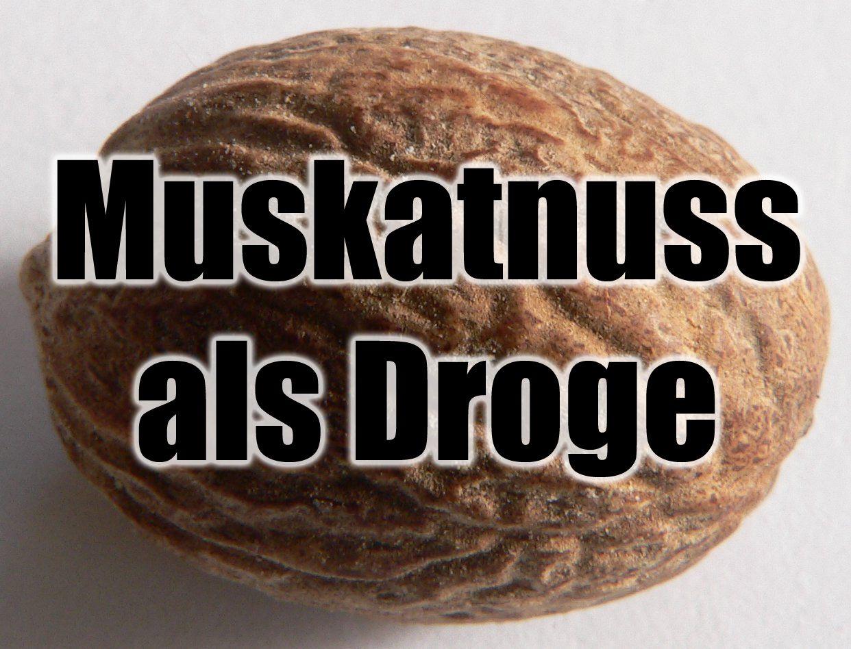Muskatnuss Als Droge Psychoaktive Pflanze Rauschmittel Pflanzen Heilpflanzen