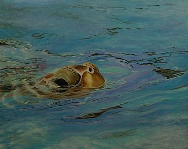 Green Sea Turtle - Painting Art by BetsyPopp