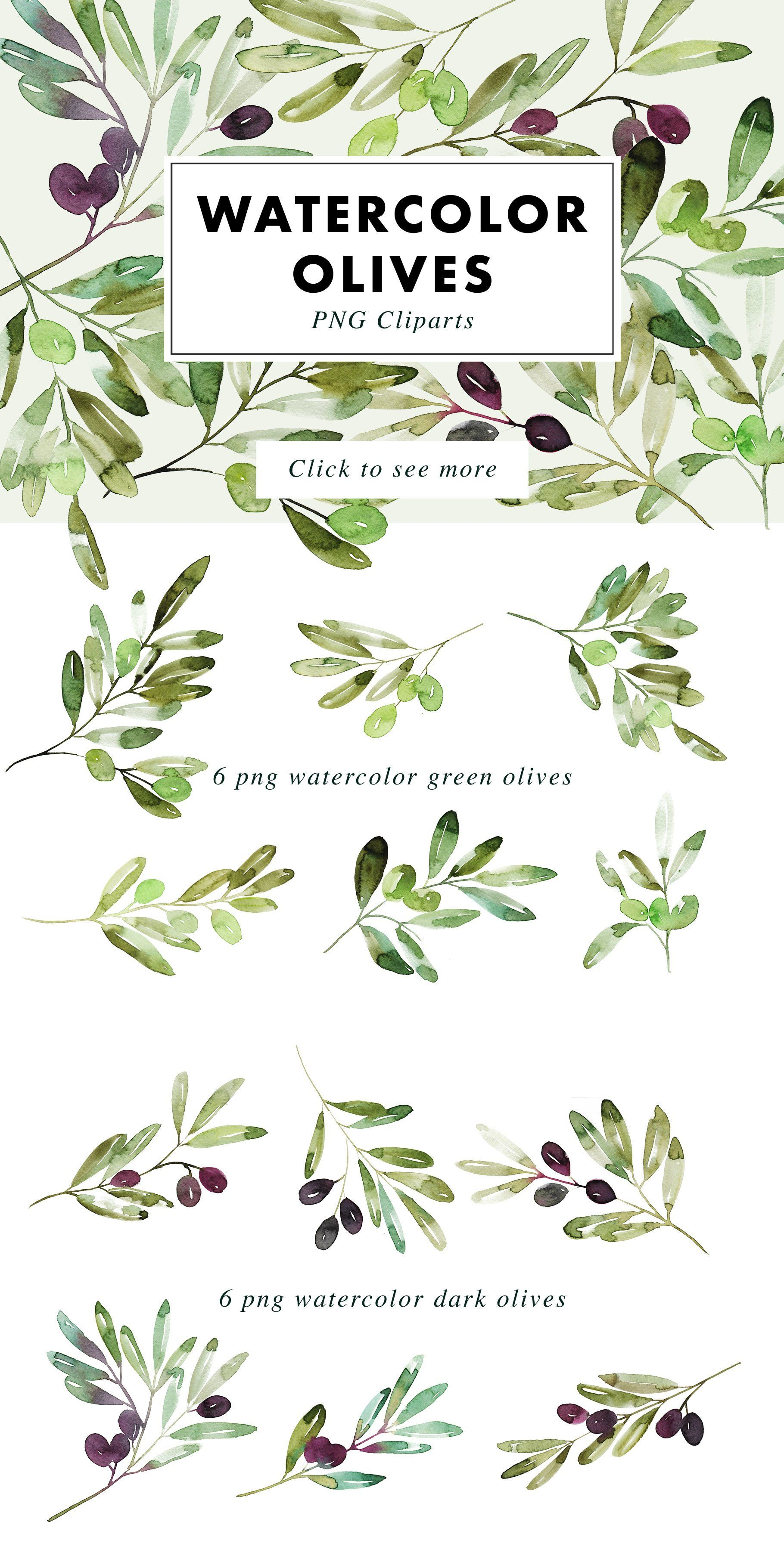 12 Watercolor Olive Branches 688892 Illustrations Design Bundles Olive Branch Leaf Illustration Branch Drawing