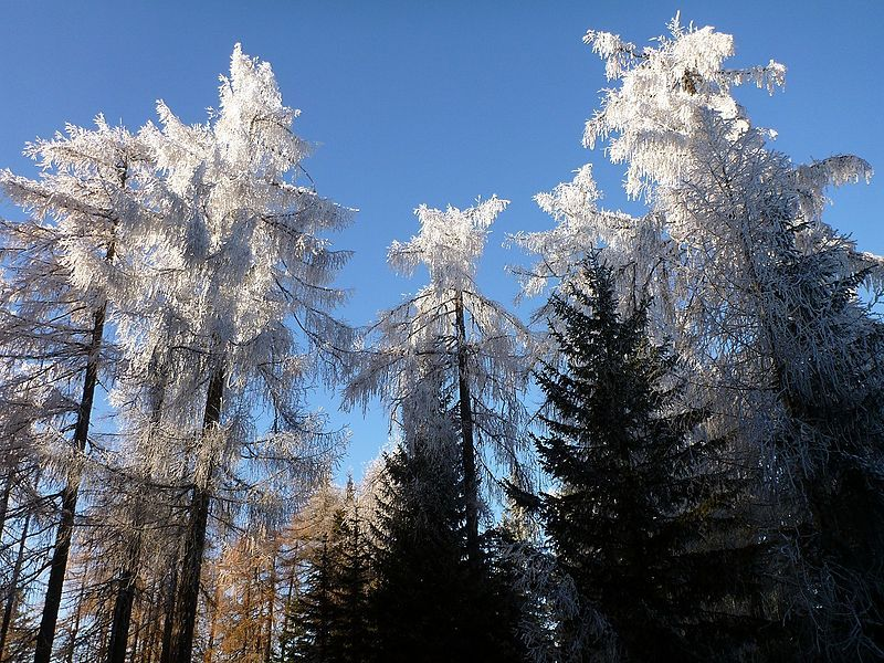 File: Magia Nella Foresta di Tarvisio.jpg