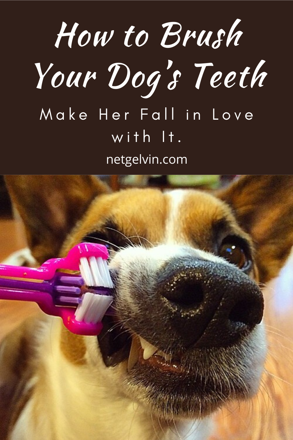 How To Brush Your Dog S Teeth And Make Her Fall In Love With It In 2020 Dog Teeth Dogs Your Dog