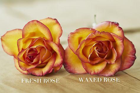 Flirty Fleurs The Florist Blog Inspiration For Floral Designers Rose Varieties White Roses Rose