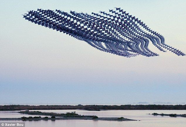 The unusual pictures part of the 'Ornithographies series' created by photographer Xavier Bou