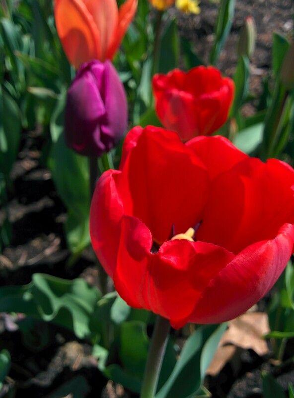 Spring flowers USA