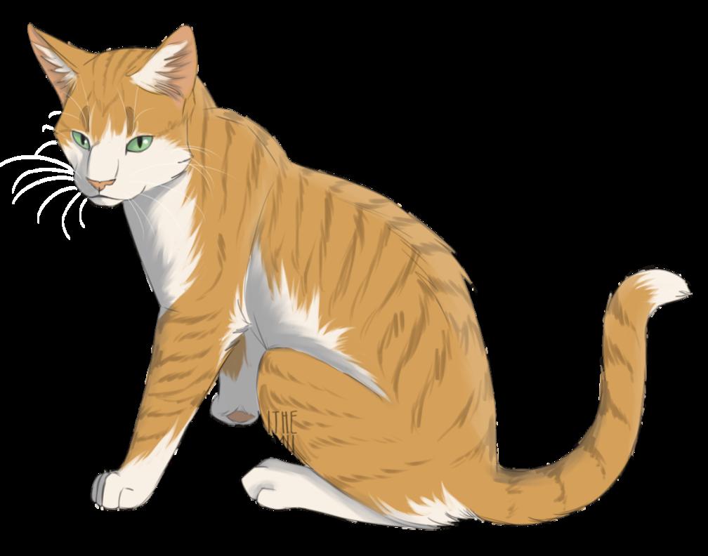 Redtail by flashtheartist Warrior cats, Warrior cat