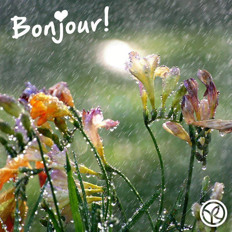 Bonjour Rainy Yvesrocher Yvesrocherturkiye Bonjour En