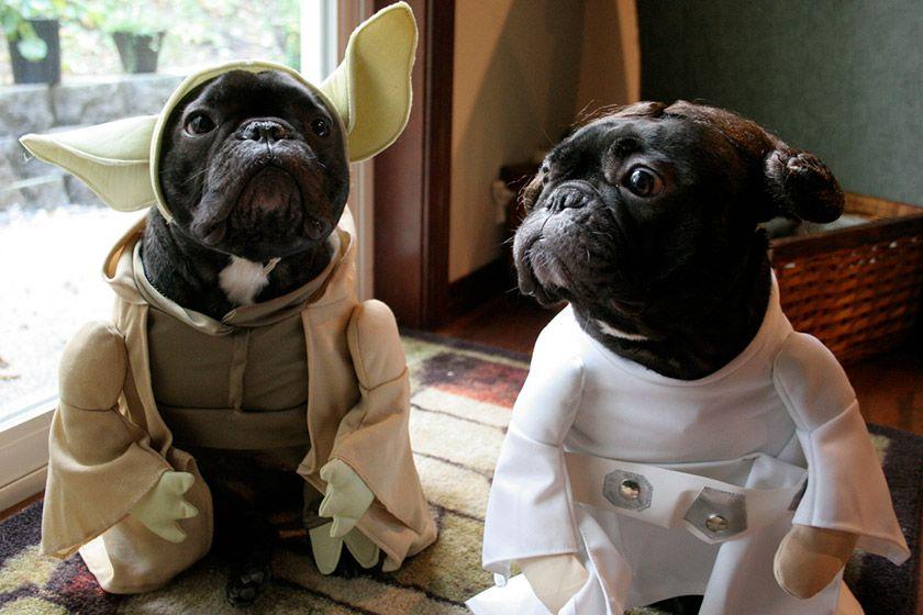Star Wars Dog Names War Dogs Cute French Bulldog Dog Costumes