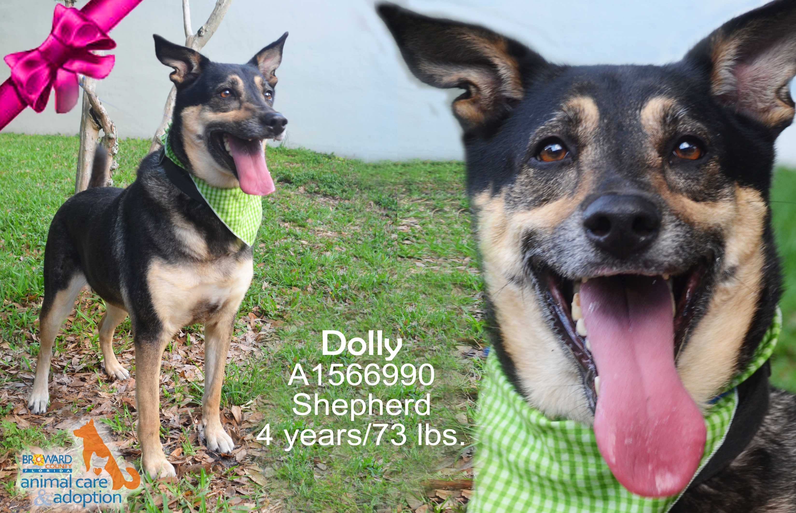 Hi, my name is Dolly and I'm available for adoption at