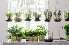 Groen groener schone lucht .. kok wonen en lifestyle hangpot