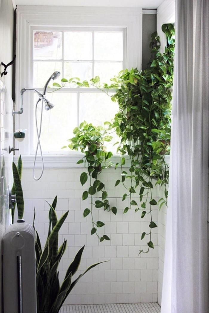 Vines Shower Square White Tile Window In Shower Snake Plant Or Maybe Sansevieria Good For Low Light Bathroom Shower Plant Bathroom Plants Green Bathroom