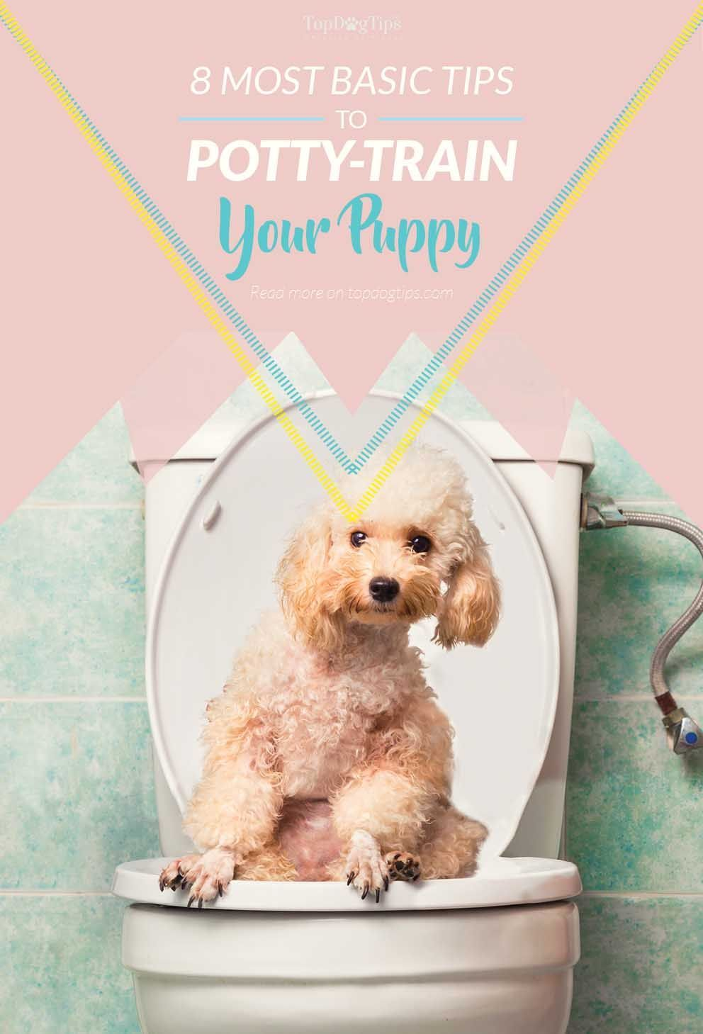8 Basic Tips For Potty Training A Puppy Training Your Puppy Cat Toilet Training Puppy Potty Training Tips