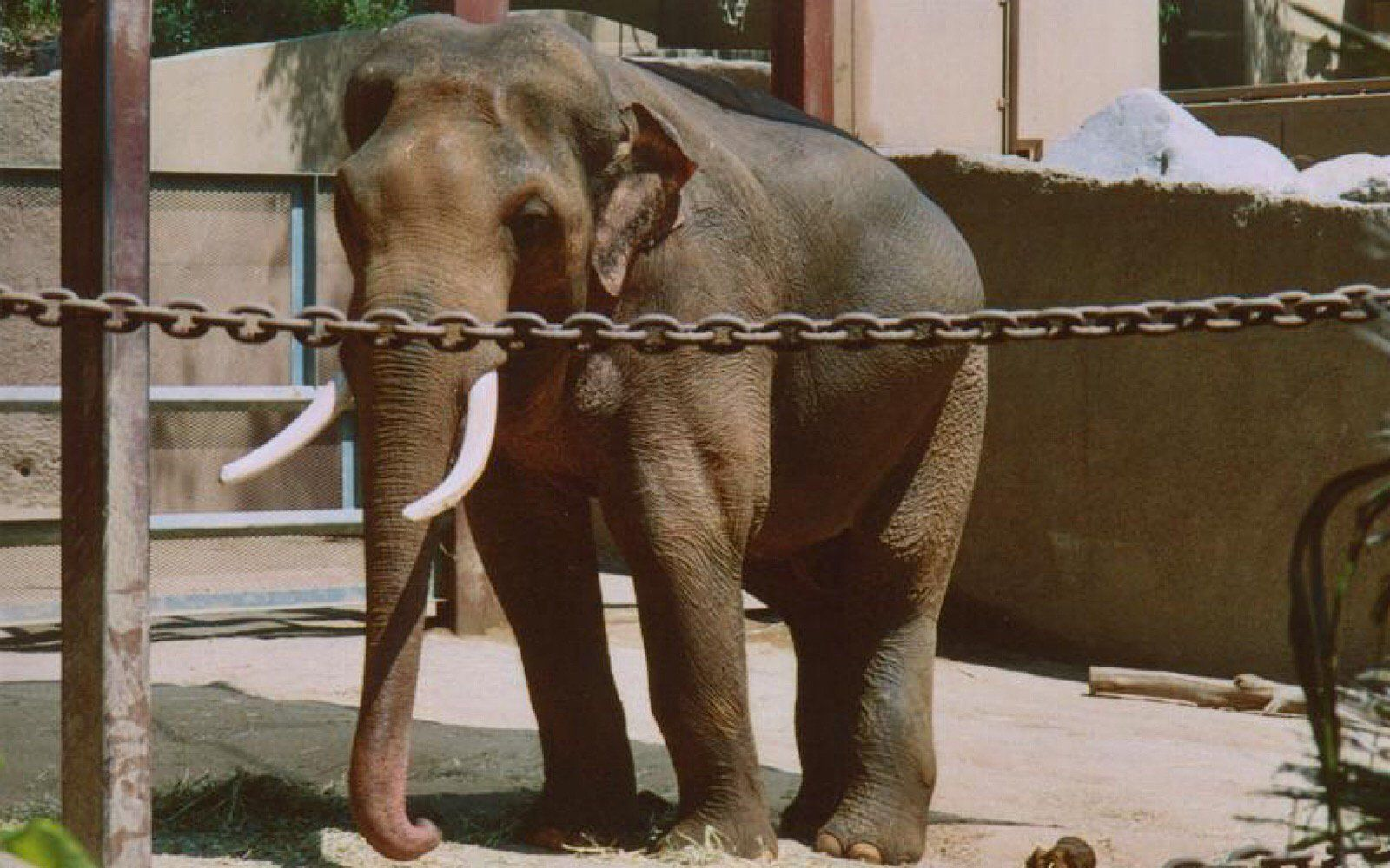 Great News Billy The Elephant Is One Step Closer To Freedom Elephant Los Angeles Zoo Animal Shelter