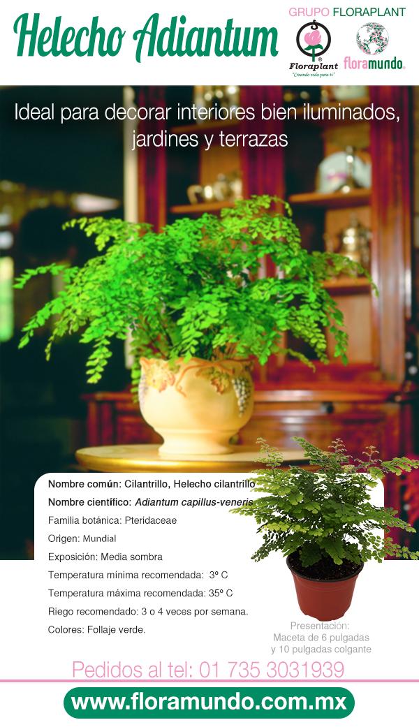 Helecho Adiantum Jardineria Y Plantas Fertilizante Para Plantas Plantas Ornamentales De Sol