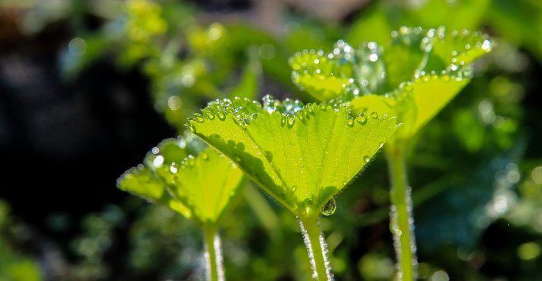 Pin by ntsarva on hmm plants carnivorous plants