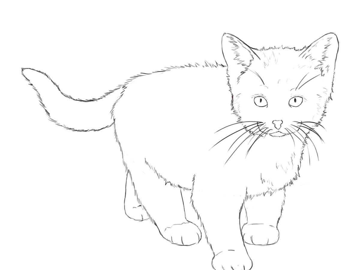 Uncategorized Drawing Of Kitten how to draw a kitten tutorials cat and sketches kitten