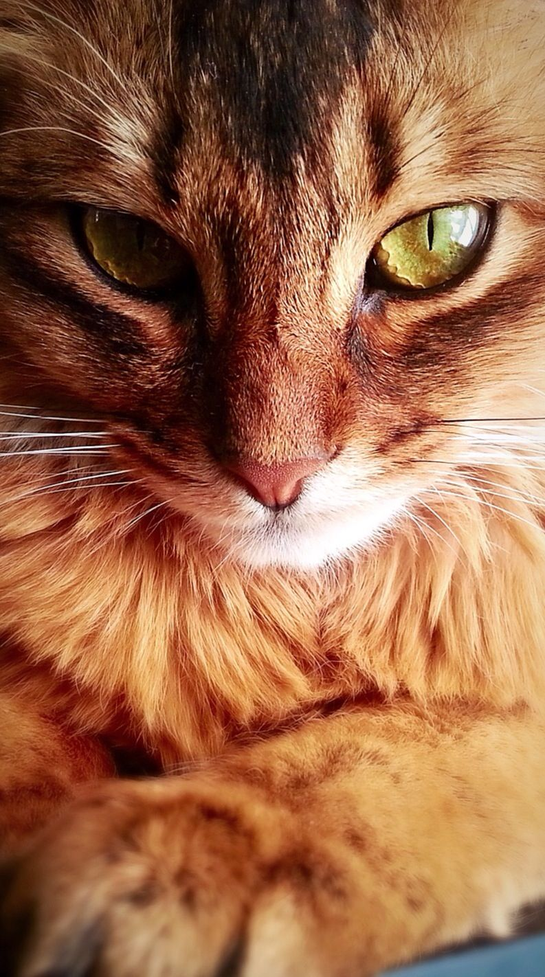 Squirrelflight Beautiful Cats Cats And Kittens Pretty Cats