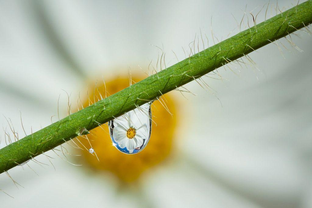 Water drops - Bert de Vos Photography