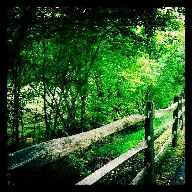 Late Summer Morning    Daniels Run Trail at Breckenridge