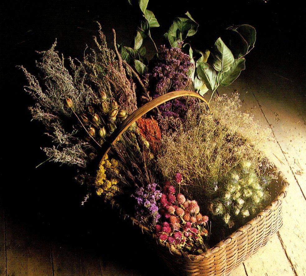 ведьмины травы картинки один коржик, сворачиваем