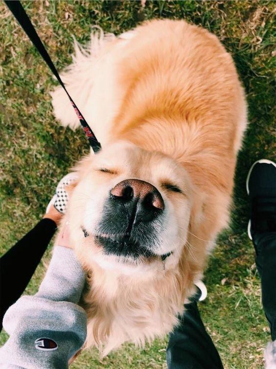 Photo of ¿Amor de perro más fuerte que amor de pareja? Puede que te sorprenda – animales – …..