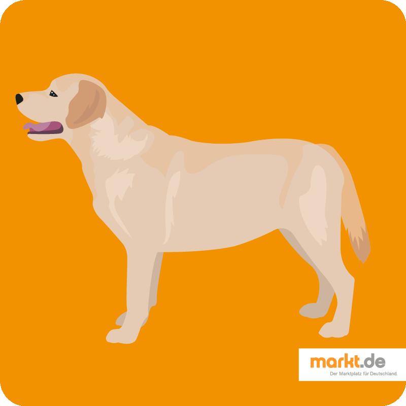 Labrador Retriever Charakter, Aussehen, Herkunft