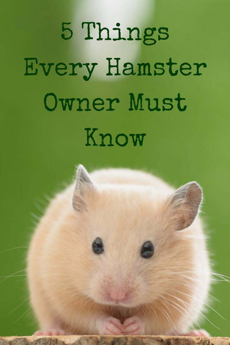 keep your hamster safe
