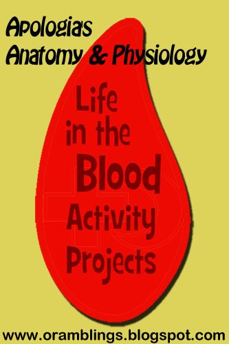 Anatomy & Physiology Blood Activities | Apologia Anatomy | Pinterest ...