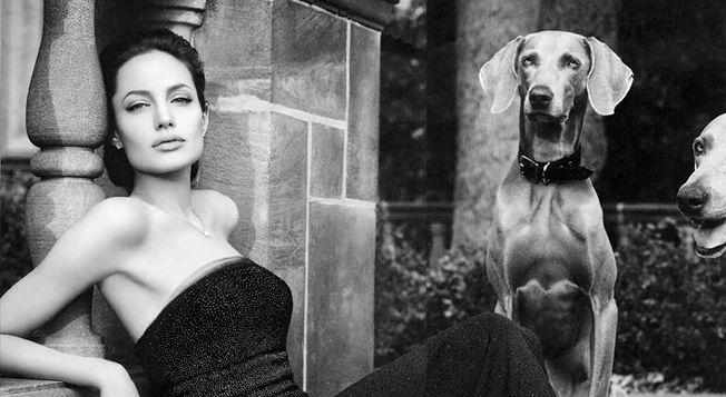Will Angelina Jolie Front for Vuitton  Annie Leibovitz