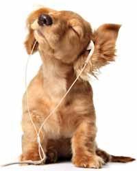 Isso sim que é música!