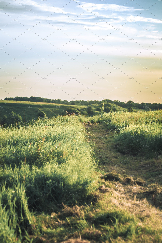 Green Grass Field Landscape Landscape Grass Field Nature Photography