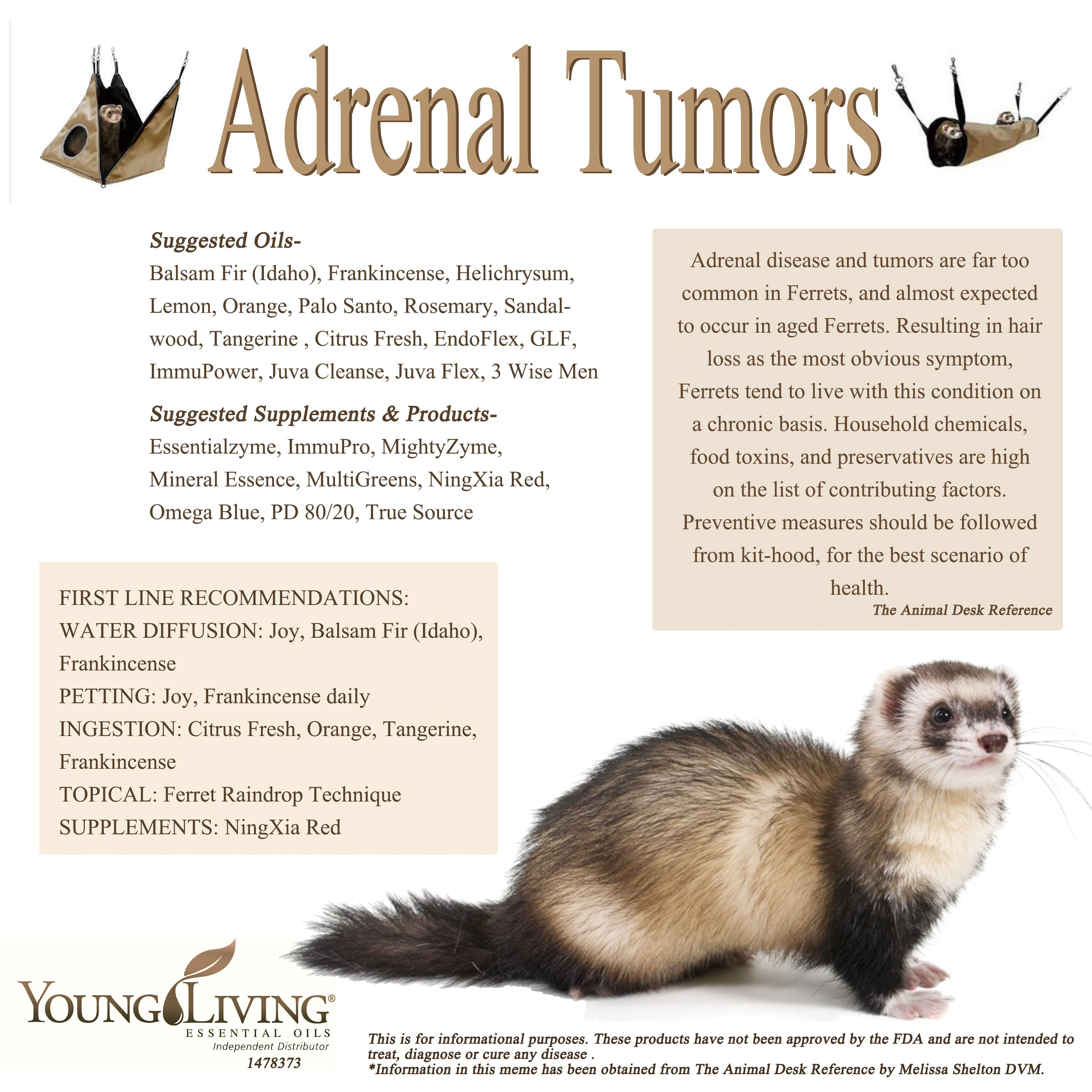Young Living Essential Oils Adrenal Tumors In A Ferret