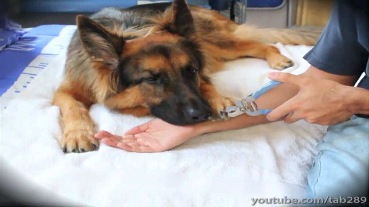 How to clicker train your dog to enjoy nail clipping