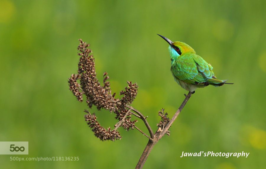 Green In Green by JawadAhmad1. Please Like http://fb.me/go4photos and Follow @go4fotos Thank You. :-)