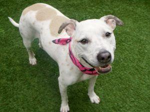 Ruby A1106816 Animal Help Pet Life Dog Adoption