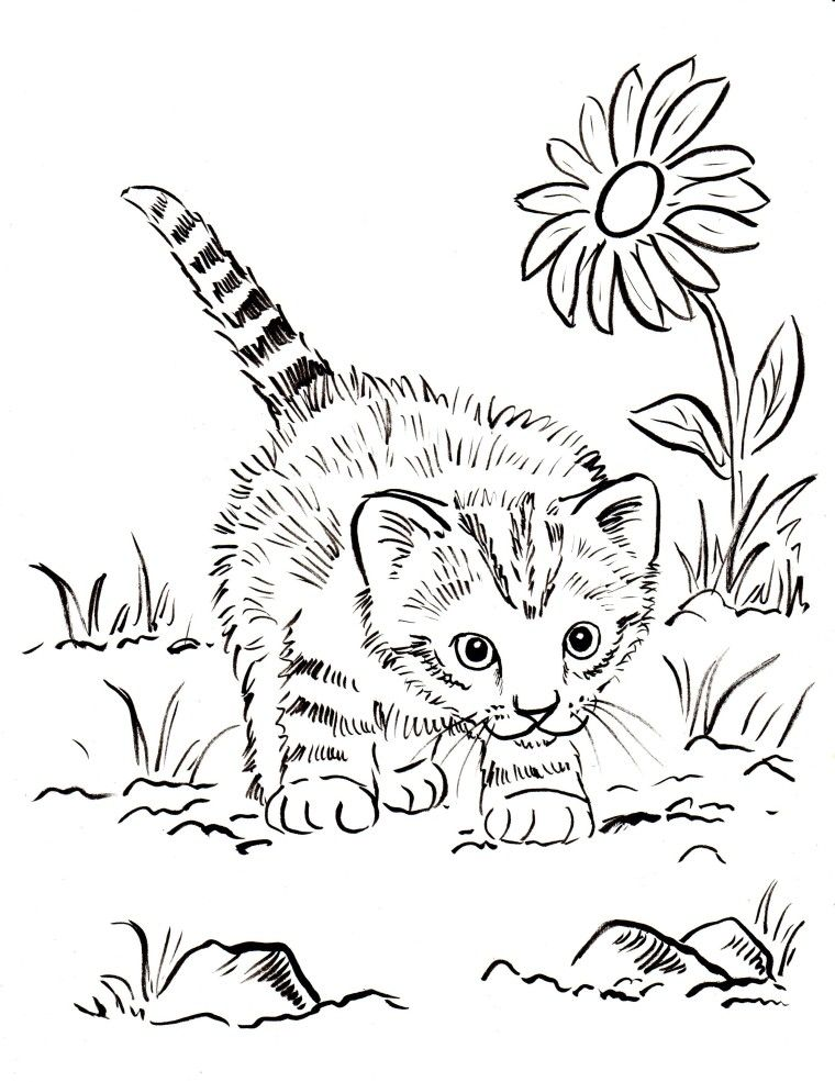 Kitten Coloring Pages | Animal Coloring Pages | Pinterest | Adult ...