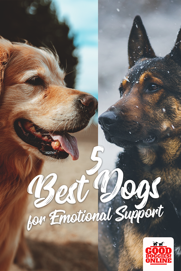 5 Best Dogs for Emotional Support Dogs, Best dogs, Basic
