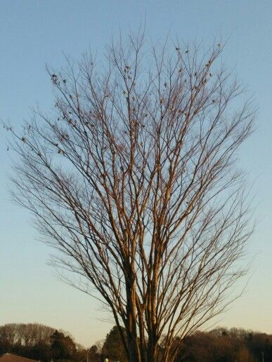 The tree of sparrow.