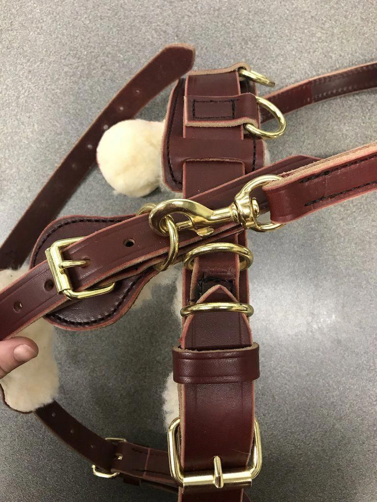how to measure a large dog for a harness
