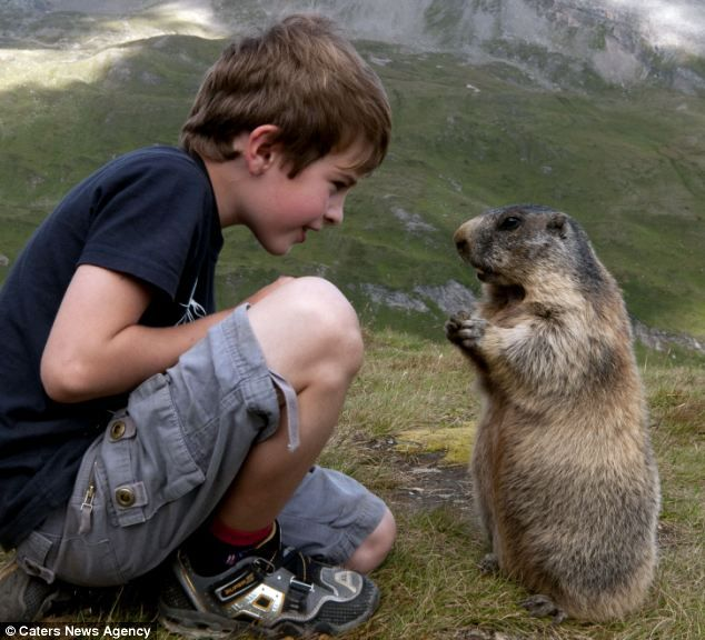 Marmot Whisperer: Eight year old Matteo Walch with his friend in the Austrian Alps by Rachel McDermott, dailymail.co.uk  #Marmot #Matteo_Walch #dailymail