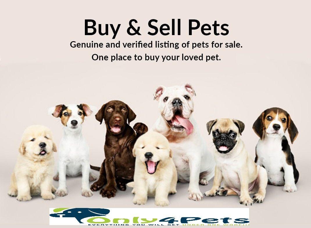 Buy Pets Online In 2020 Buy Pets Free Puppies Pets Online