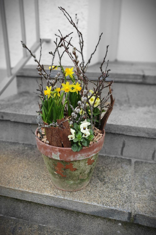 Diy Fruhlingsdeko Aussen Garten Fruhling Deko Fruhlingspflanzen Deko Fruhling Draussen