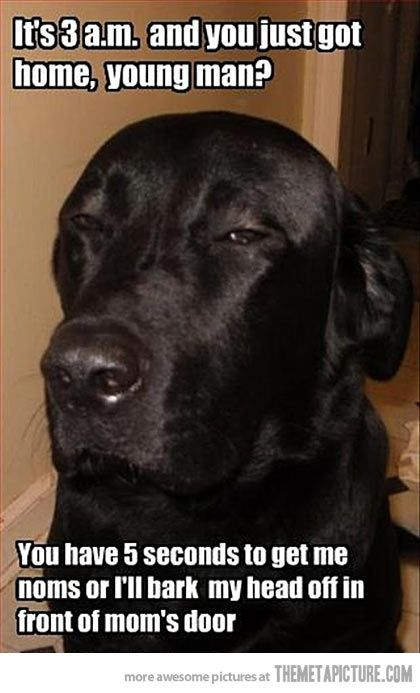 Coming Home So Late Funny Animal Pictures Funny Dogs Funny