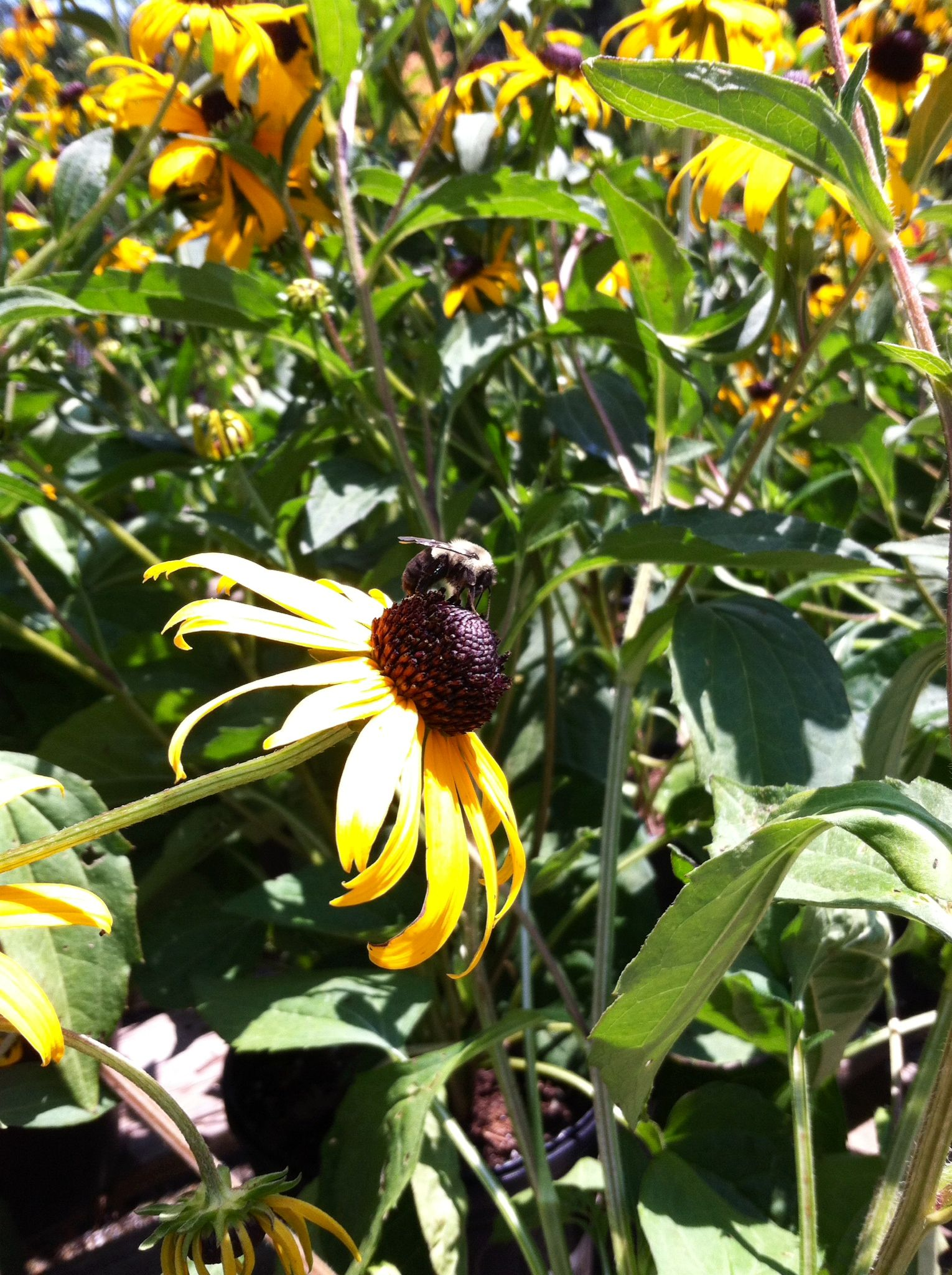 Bees A Buzzing At Gsco Garden Supplies Garden Plants