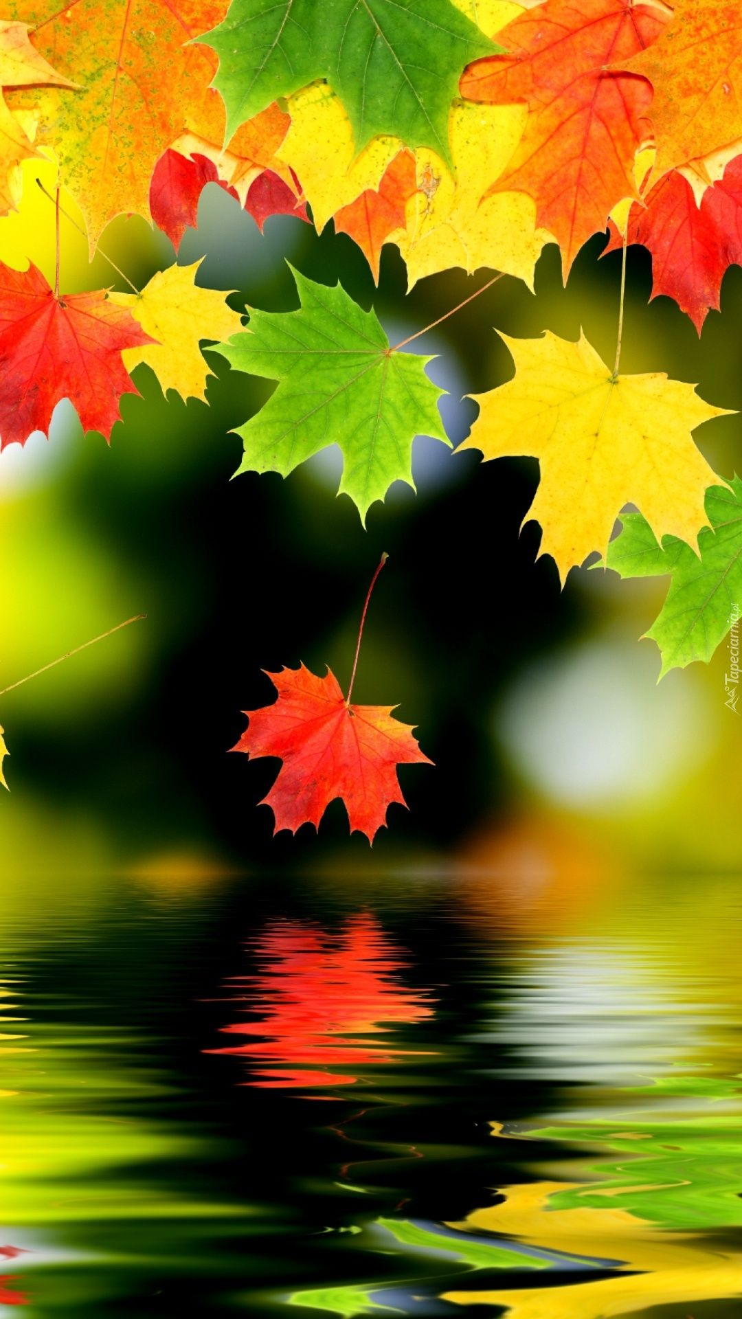 Kolorowe Liscie Spadaja Do Wody Thanksgiving Live Wallpaper Fall Wallpaper Nature Wallpaper